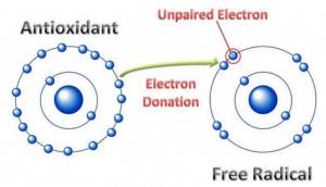 Antioxidant and free radical graphic for Macrolife